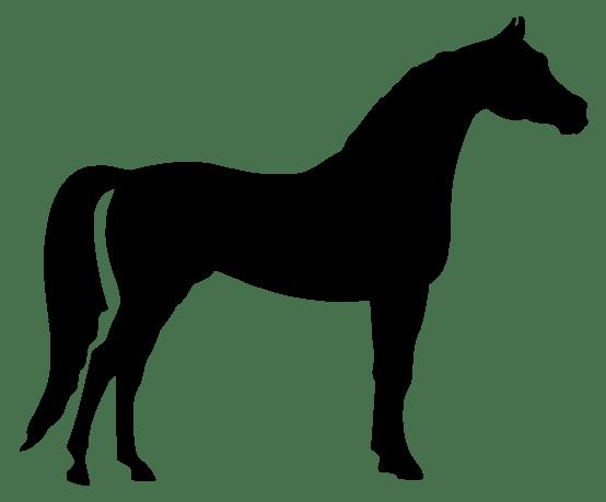 Leonidas-mario-villapalos-2